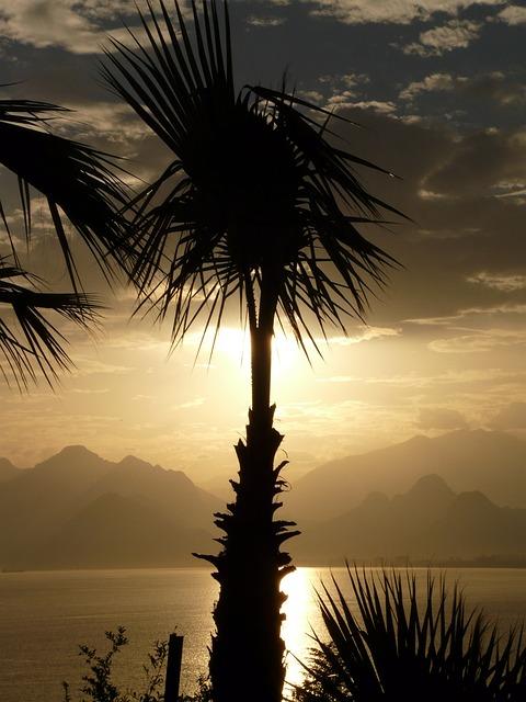 Palm, Antalya, Sea, Outlook, Palm Trees, Idyll