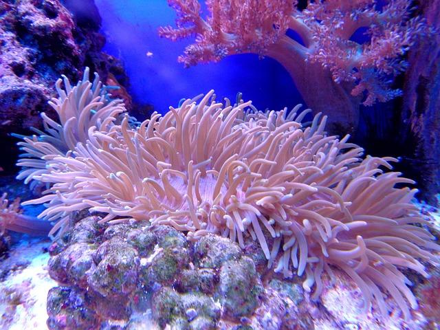Coral, Cay, Aquarium, Sea, Reef, Water, Ocean, Anemone