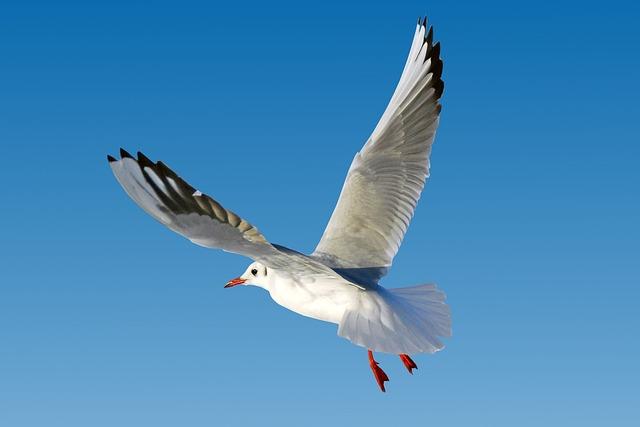 Seagull, Baltic Sea, Sea, Beach, Warnemünde, Rostock