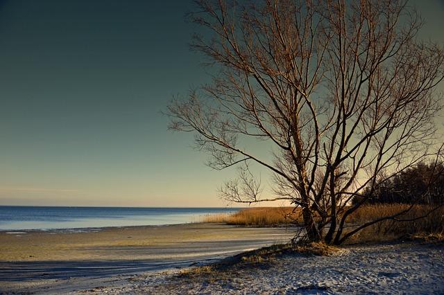 Tree, Landscape, Sea, Ebb, Watts, Sand Beach, Nature
