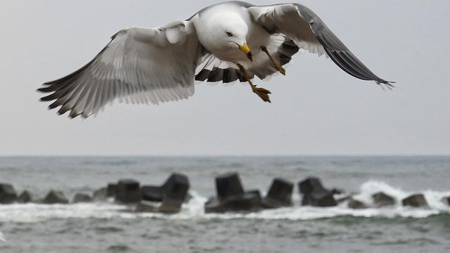 Animal, Sea, Beach, Wave, Sea Gull, Seagull, Seabird