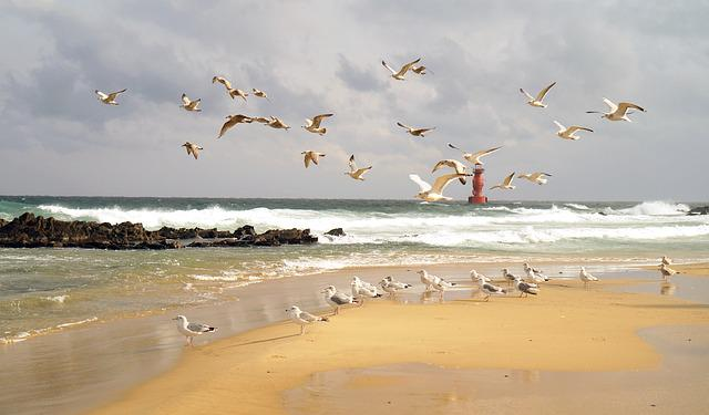 Sea, Lighthouse, Seagull, Waves, Sky