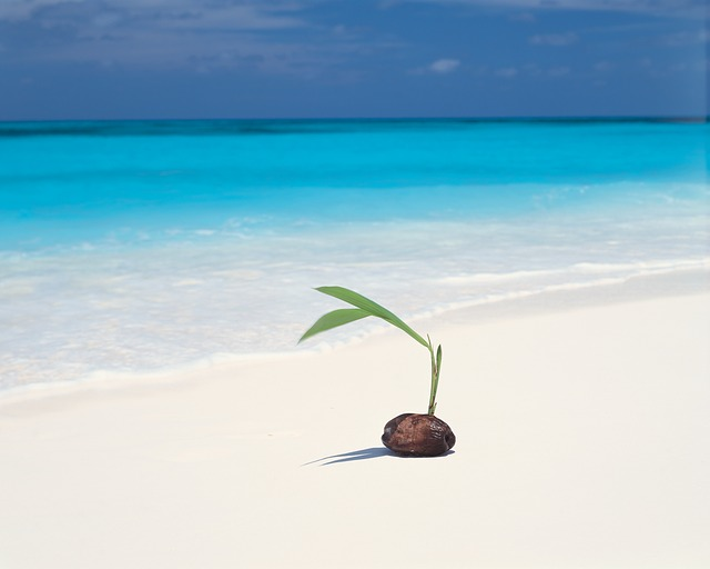 Beach, Ocean, Plant, Sand, Sea, Seascape, Seashore