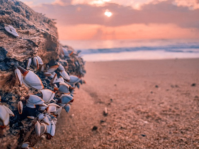 Sri Lanka, Beach, Sea Shell, Sea, Ocean, Nature
