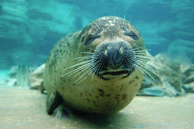 Ocean, Sea, Waters, Marine, Animal, Swimming
