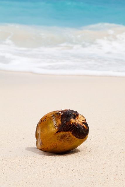 Coconut, Tropical, Ocean, Sand, Sea, Beach, Exotic