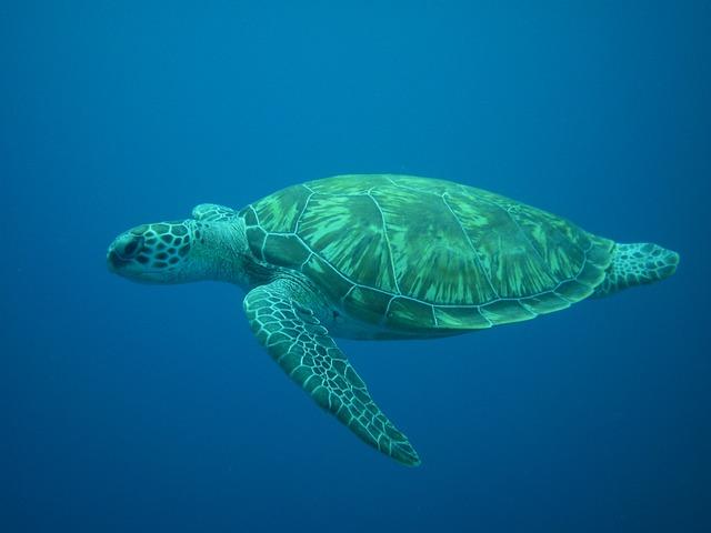 Turtle, Diving, Sea