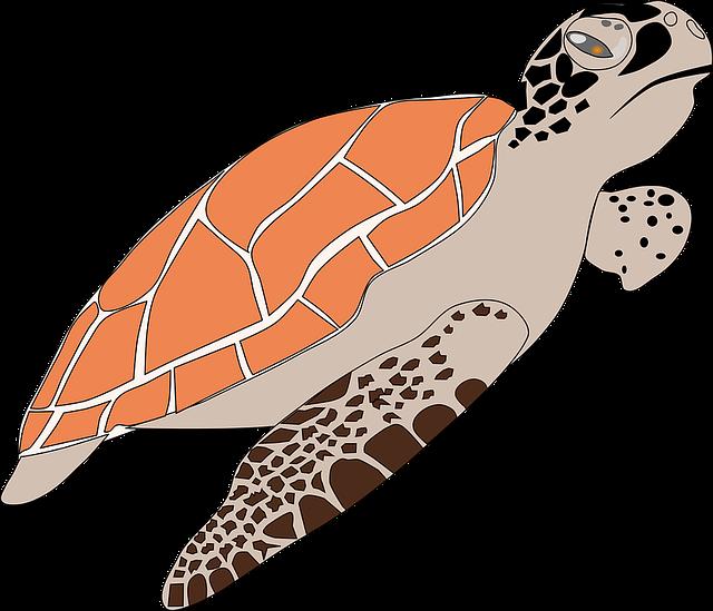 Sea Turtle, Animal, Wildlife, Turtle, Sea, Tortoise