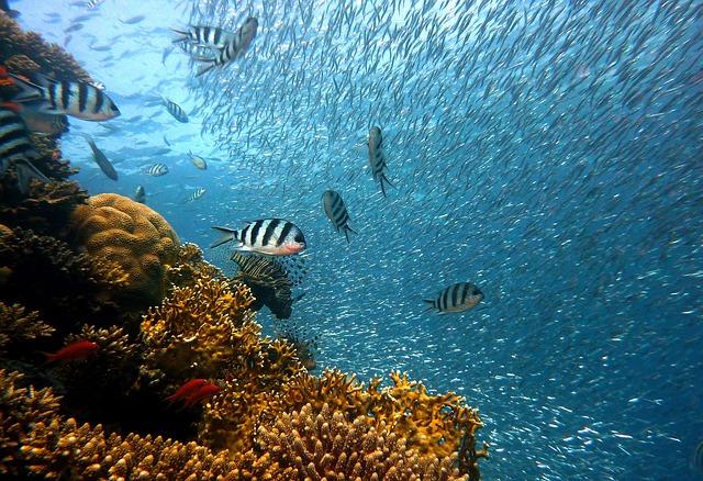 Fish, Underwater, Diving, Water, Underwater World, Sea