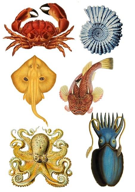 Fish, Collage, Vintage, Ocean, Life, Crab, Sea, Shell
