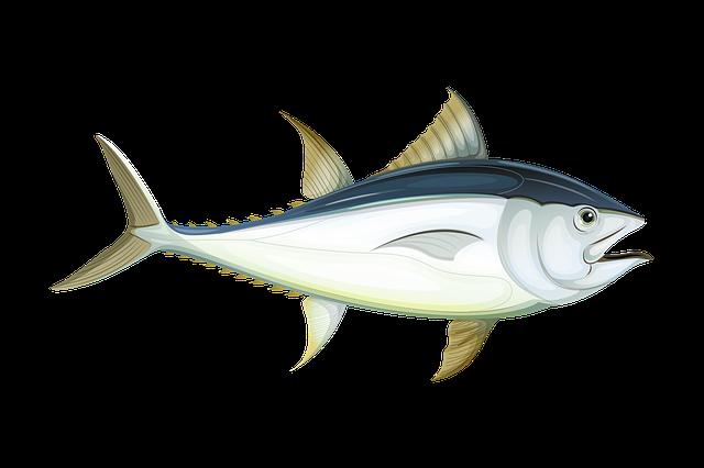 Free Photo Fish Cartoon Underwater Clipart Water Sea Swim