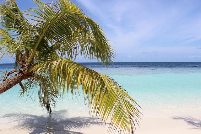 Island, Sea, Maldives, Palm Trees, Water, Paradise