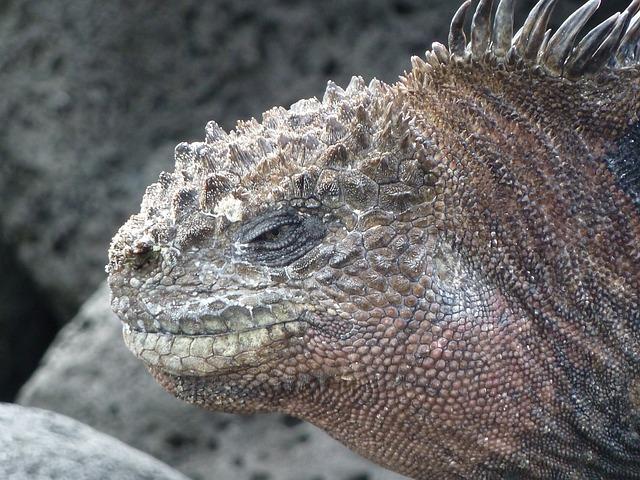 Sea lizard, Galapagos, Lizard, Iguana, Water, Sea