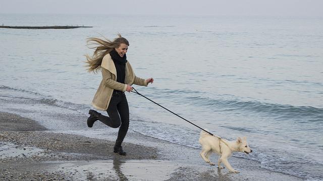 Dog, Sea, Beach, Sand, Water, Surf, Blue, Coast