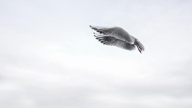 Gull, Wing, Bird, Sea, Fly, Venice, Water Bird, Birds