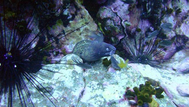 Moray, Thailand, Dangerous, Sea-life, Eel, Sea, Marine