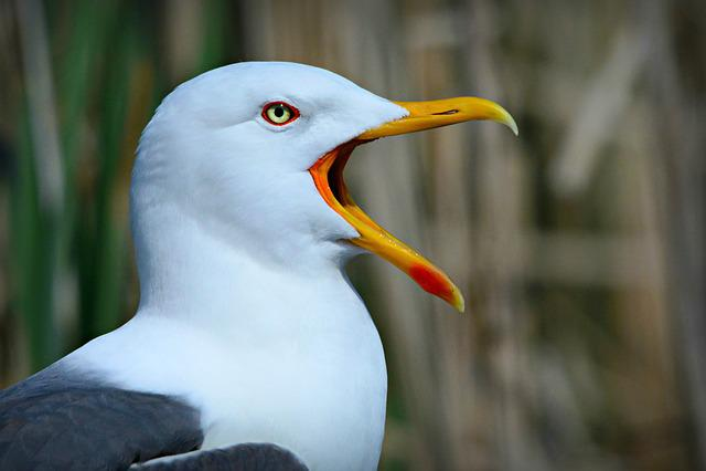 Seagull, Seabird, Bird, Gull, Animal, Beak, Feather