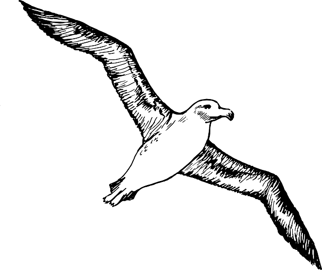 Albatross, Seabirds, Flying, Sky, Wings, Soaring, Rise