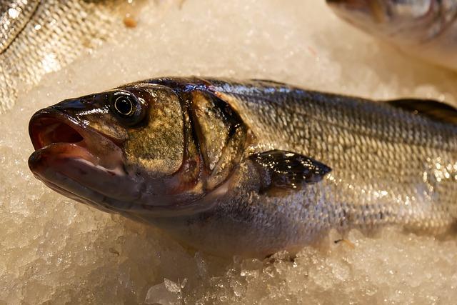 Eat, Fish, Seafood, Sea, Food, Animal, Sea Animal