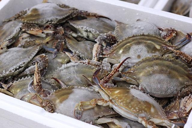Blue Crab, Frozen Crab, Fishery, Market, Fresh, Seafood