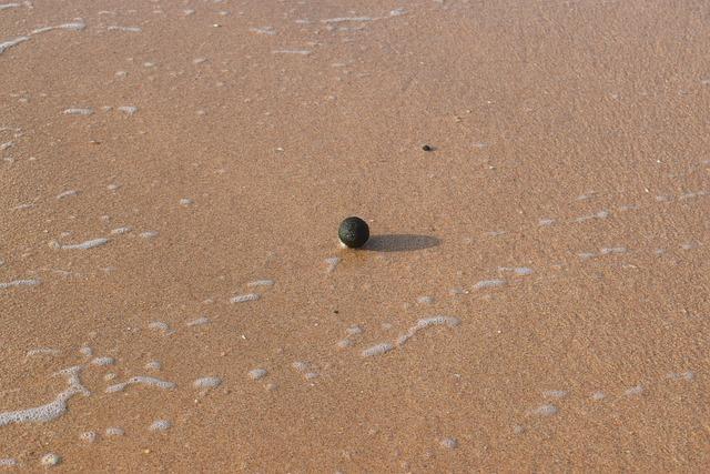 Seafood, Sand, Ball, Weed