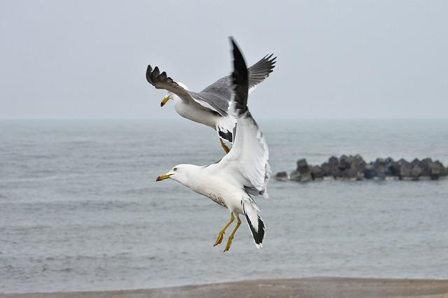 Animal, Sea, Beach, Sea Gull, Seagull, Seabird