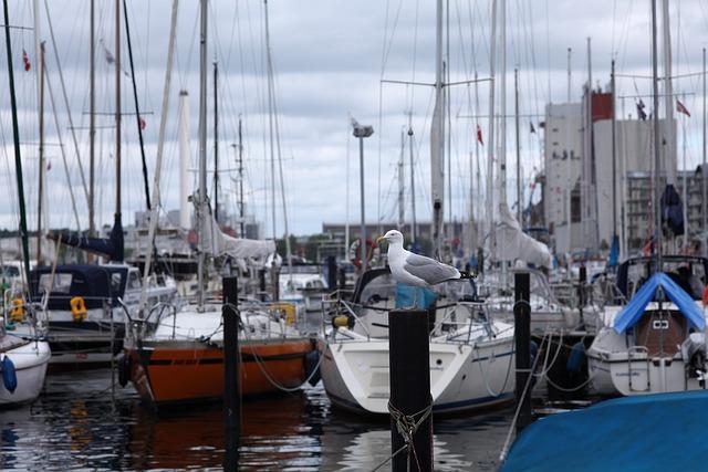 Seagull, Sailing Boats, Port, Fjord, Coast, Mood