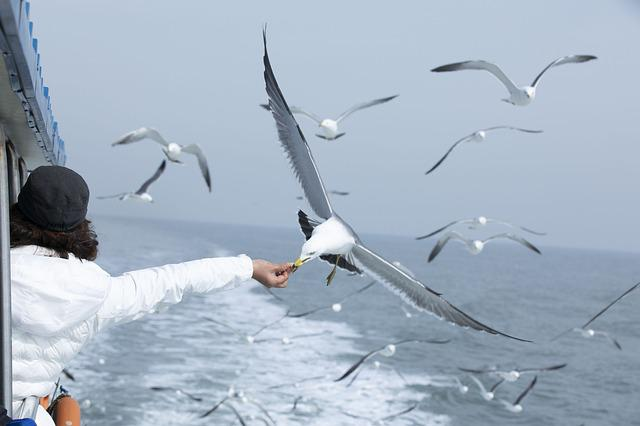 Seagull, Sea, Seagulls Flock, Feeding, Seize The Moment