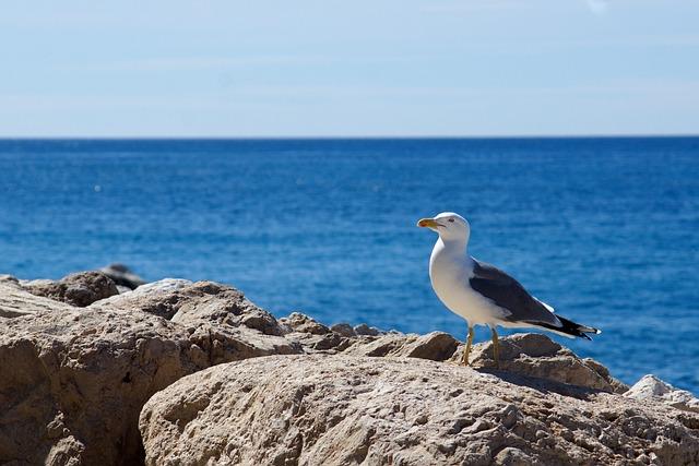 Seagull, Sea, Mediterranean