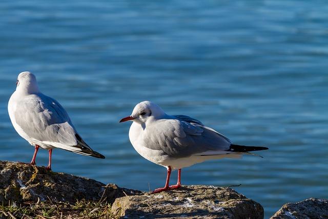 Seagull, Bird, Animal World, Lake, Nature, On The Water
