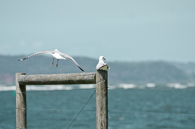 Seagull, Post, Fly, Headland, Ocean, Waves
