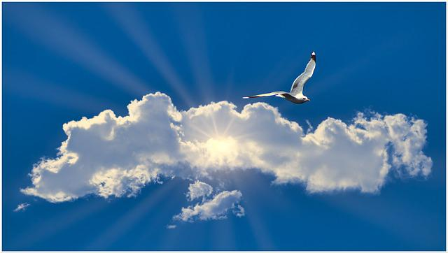 Seagull, Cloud, Flying, Glide, Sunbeam, Penetrate, Rays