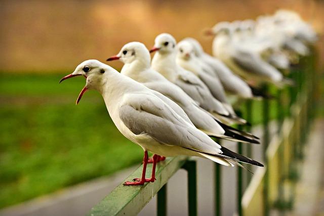 Seagull, Sea Bird, Beak, Open, Plumage, Standing, Row