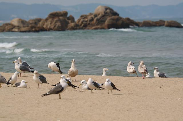 Sand To The Beach, Seagull