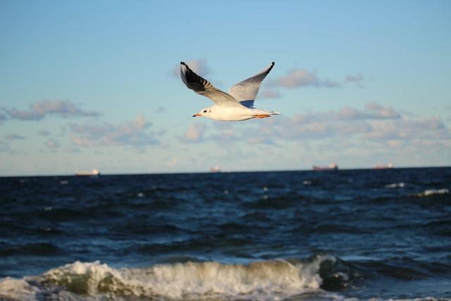 Sea, Seagull, Afraid, The Baltic Sea