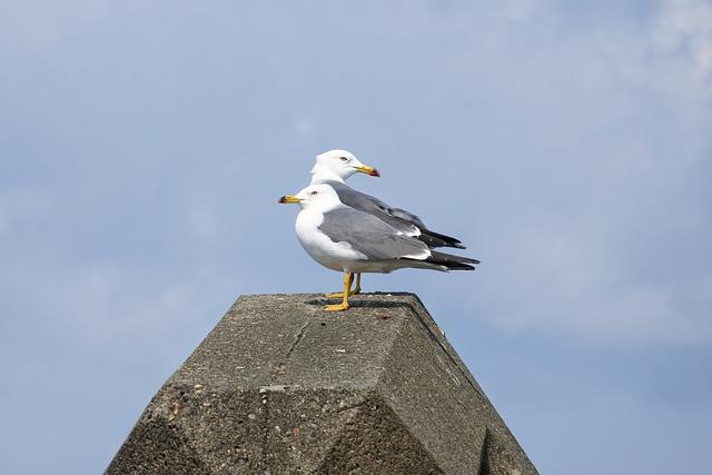 Animal, Sky, Cloud, Beach, Sea Gull, Seagull, Seabird