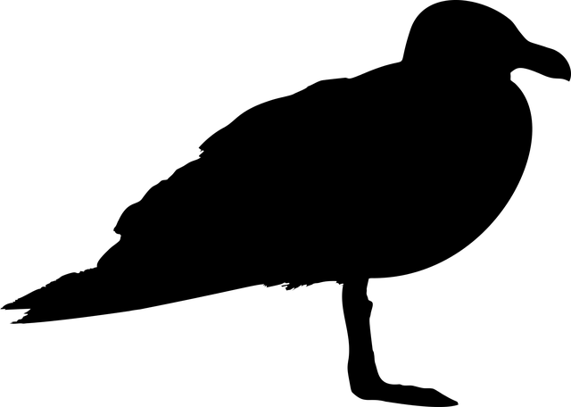 Seagull, Bird, Animal, Profile, Silhouette, Svg, Vector