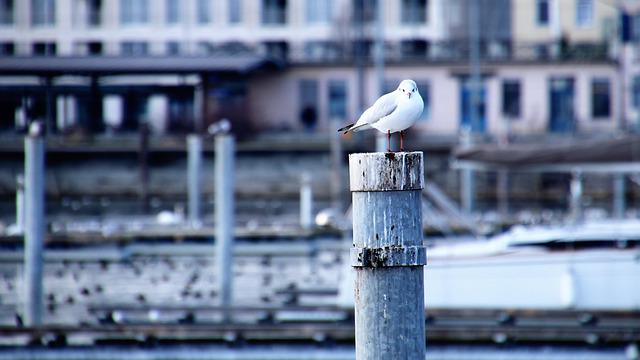 Seagull, Architecture, Port, Beach, Water