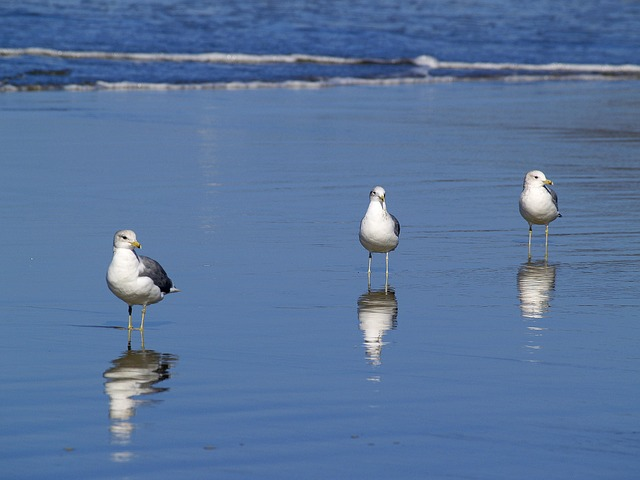 Seagulls, Beach, Water, Ocean, Pacific, Sand, Nature