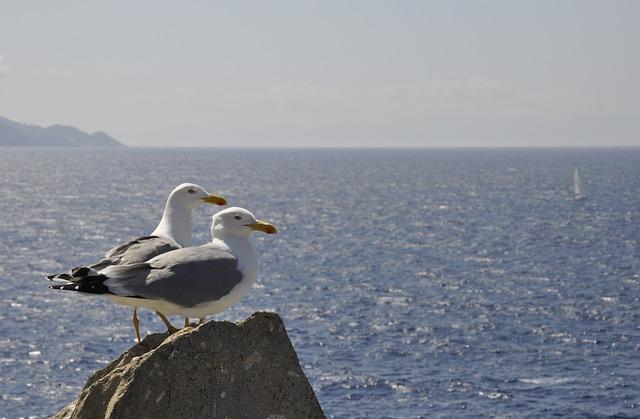 Sea, Waters, Ocean, Costa, Nature, Seagulls, Island