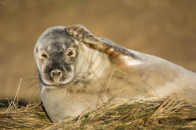 Seal, Closeup, Wildlife, Mammal, Nature, Beach