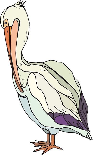 Pelican, Searbird, Pelecanidae