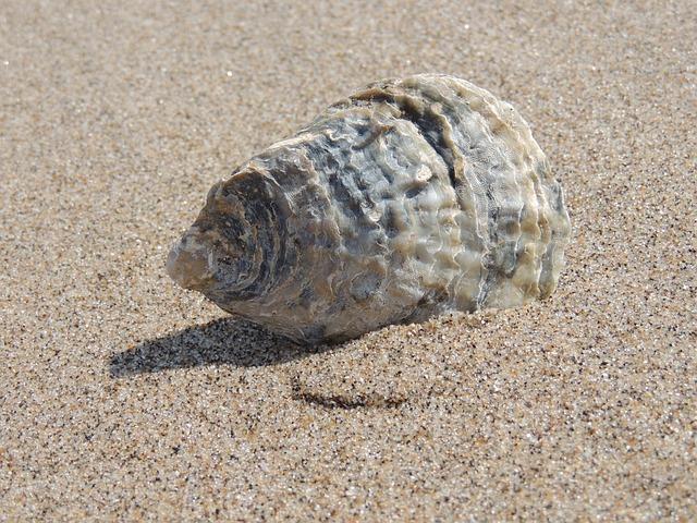 Seashell, Sea, Shell, Beach, Ocean, Sand, Vacation