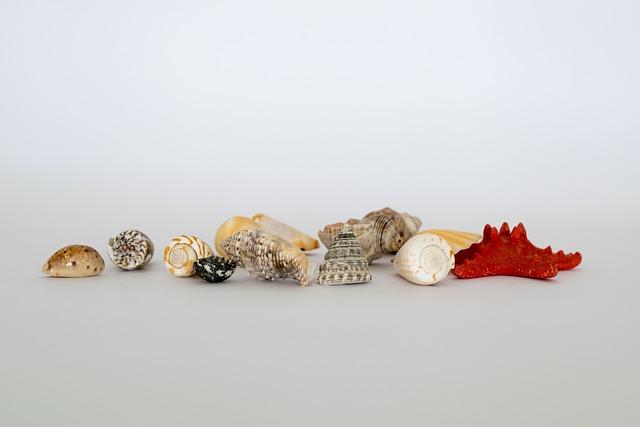 Desktop, Decoration, Shining, Shell, Gift, Seashell