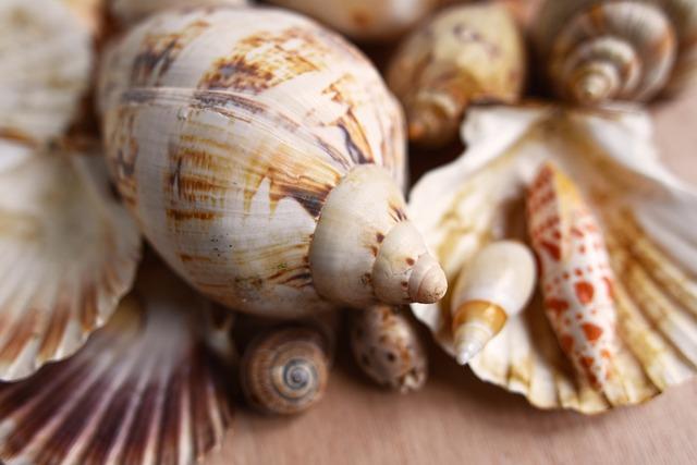 Seashells, Mollusk, Scallop, Conch, Spiral, Clam