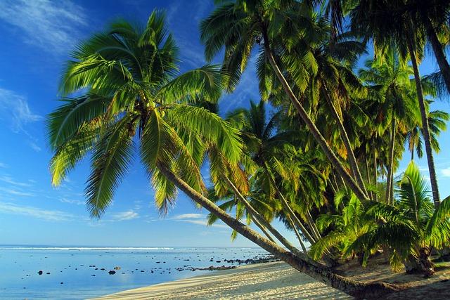 Palms, Tropical Beach, Tropical, Sand, Seashore