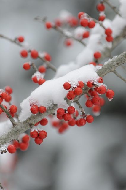 Winter, Branch, Tree, Nature, Season