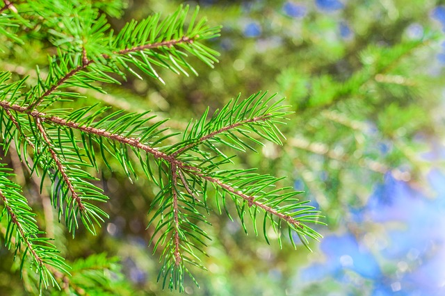 Nature, Needle, Tree, Outdoors, Season, Branch, Color