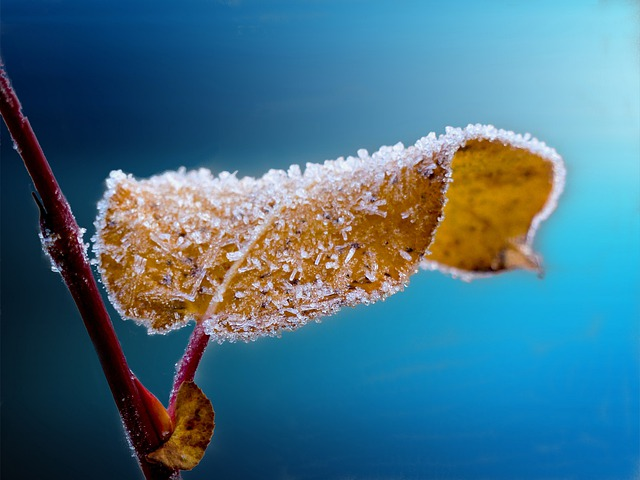 Frosted, Leaf, Branch, Frost, Blue, Nature, Ice, Season