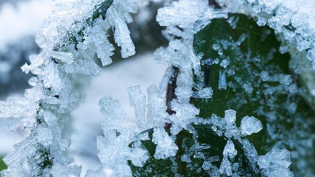 Frost, Winter, Snow, Frozen, Season, Cold, Ice, Leaf